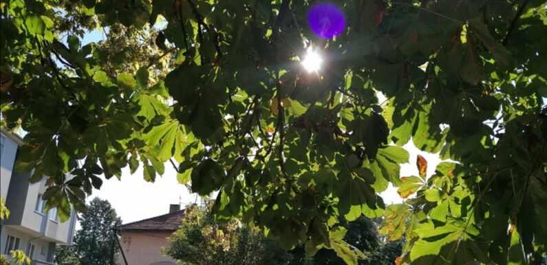 METEOS: U SREDU JUTRO SVEŽE, TOKOM DANA SUNČANO